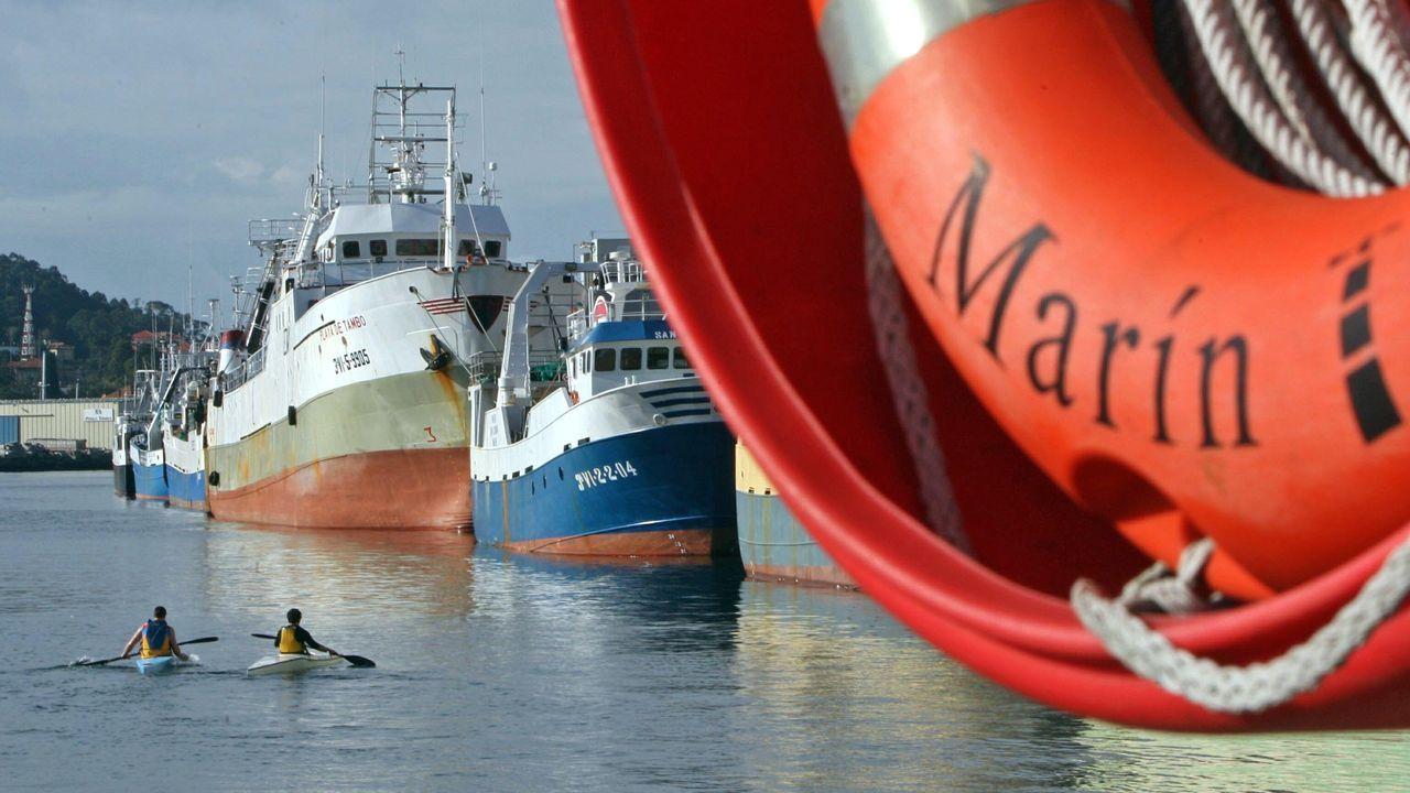 Dos gallegos impulsan una campaña para curar a perros enfermos de cáncer.Enjambre de mástiles en un colapsado puerto de Dajla