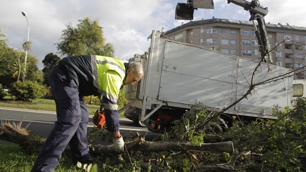 Retirada de un árbol que cayó en A Coruña