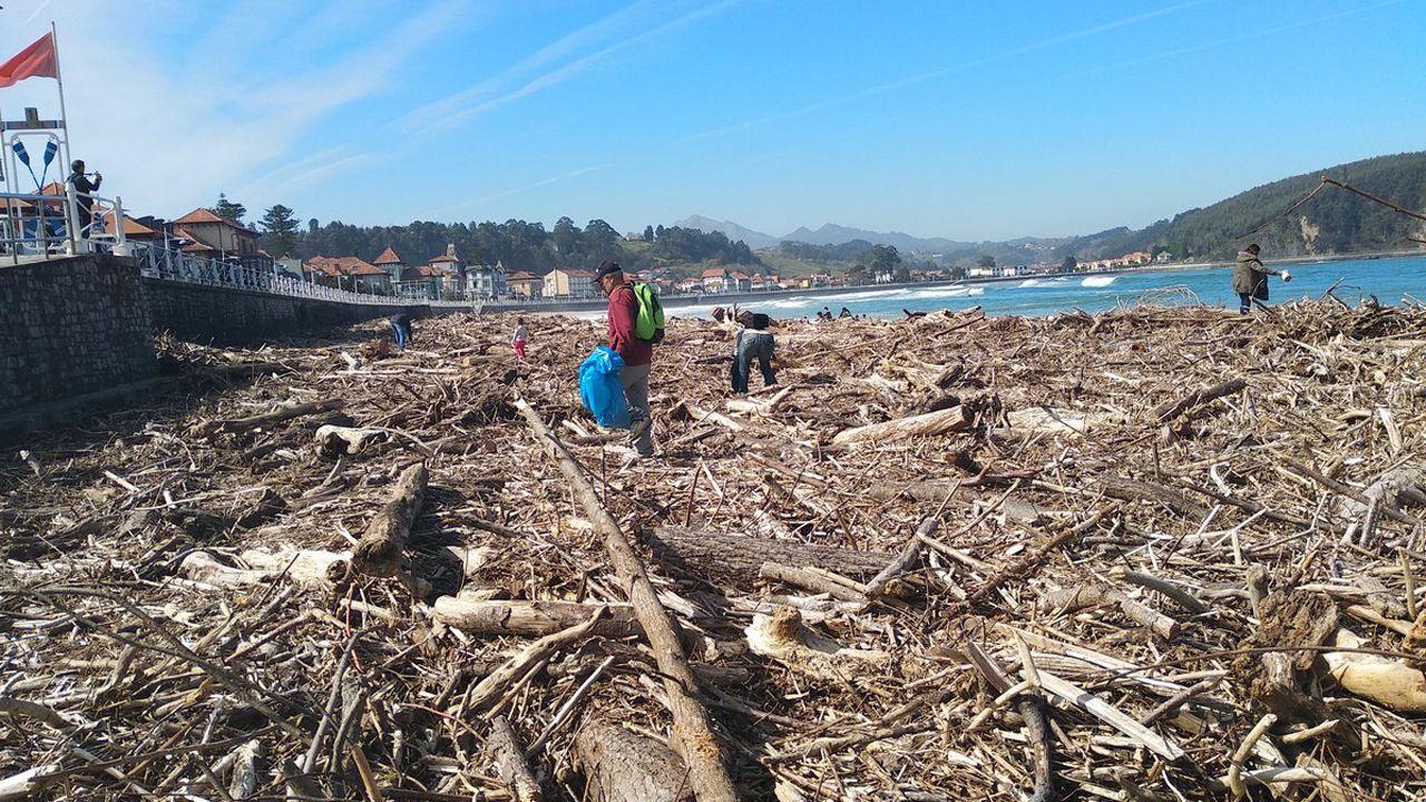 Retiran con una grúa el cetáceo varado en El Musel.La playa de Ribadesella, llena de madera arrastrada por las riadas