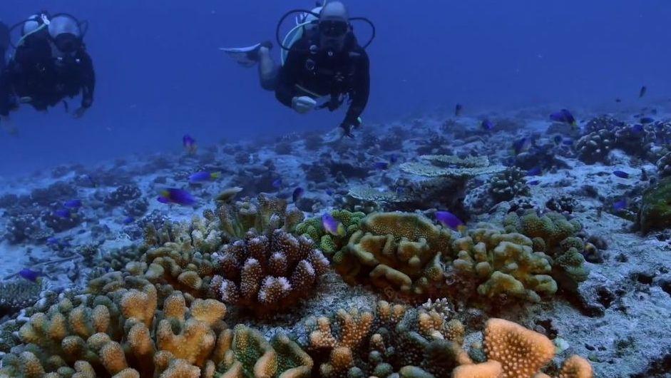 ¿Cómo influye el hombre en lo que ocurre bajo el mar?.Los protagonistas del filme en la imagen que preside el cartel de «The Farewell»