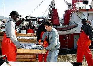 Isaac Gaciño, en el centro, descargando sardina en el muelle de Portosín en una foto de archivo