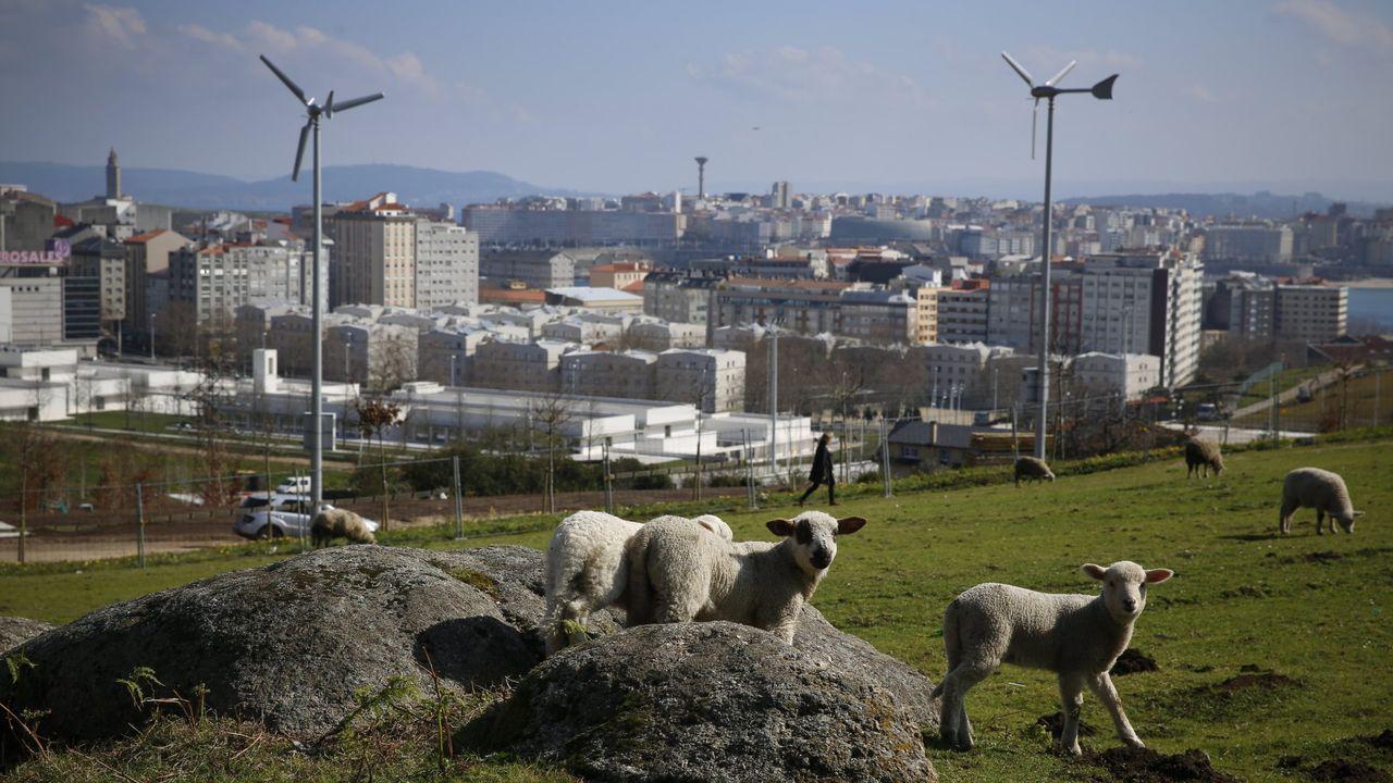El viento siempre se ha usado como fuente de energía, antiguamente en los molinos y hoy en los modernos generadores eólicos