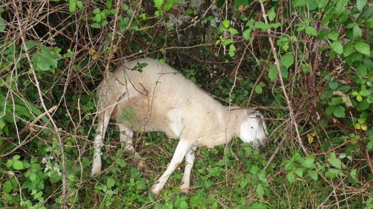 Animales muertos en una de las fincas