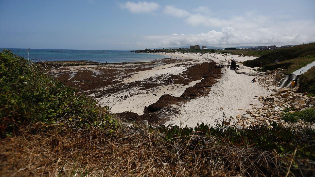 Algas en la playa de Llas, Foz