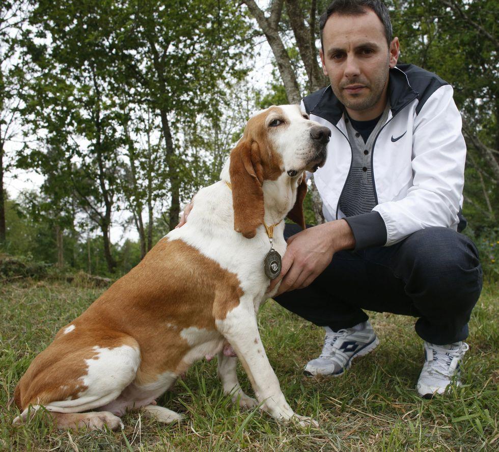 «Tora» es una sabueso español de ocho años que rastrea jabalíes con una efectividad del 90 %.