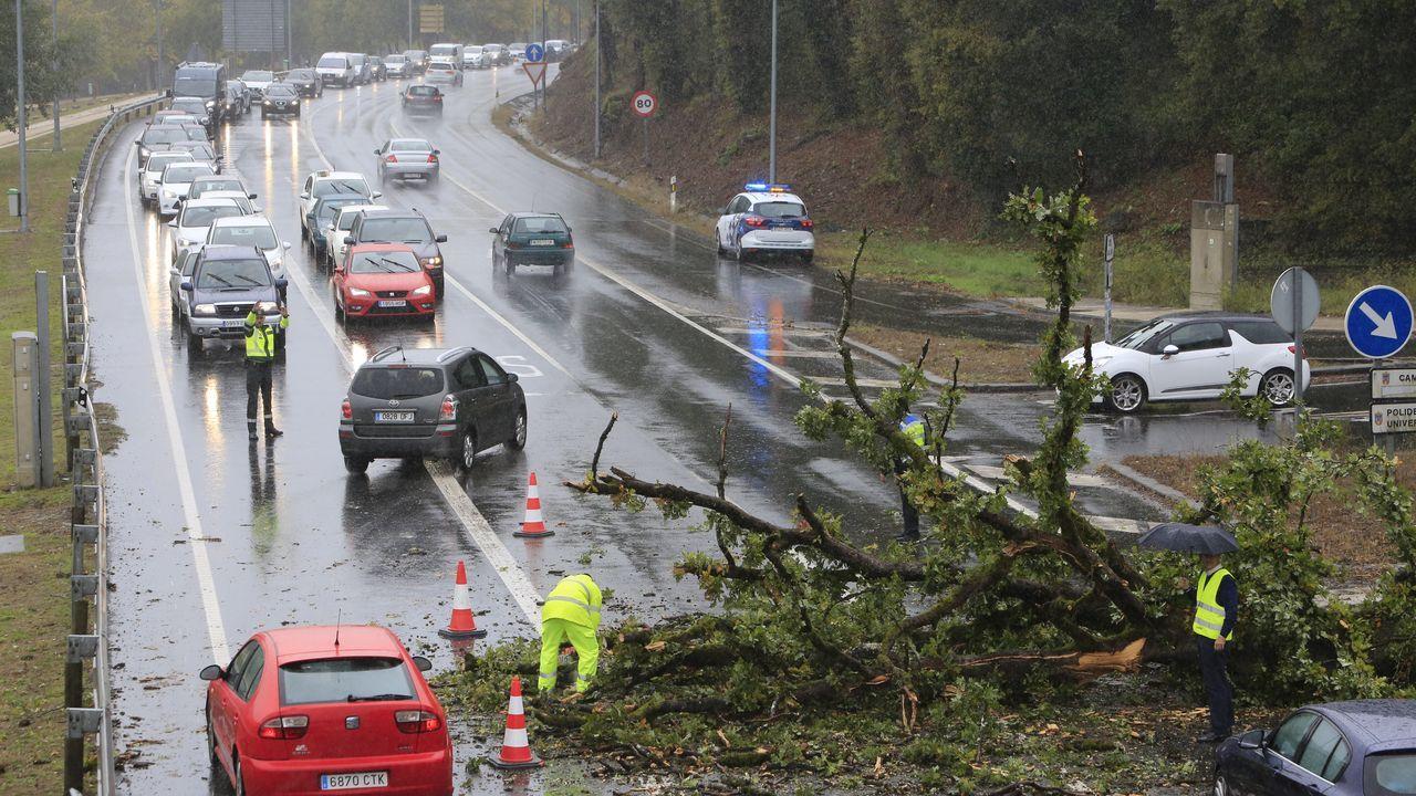 La caída de un árbol causa importantes retenciones rn la N-VI