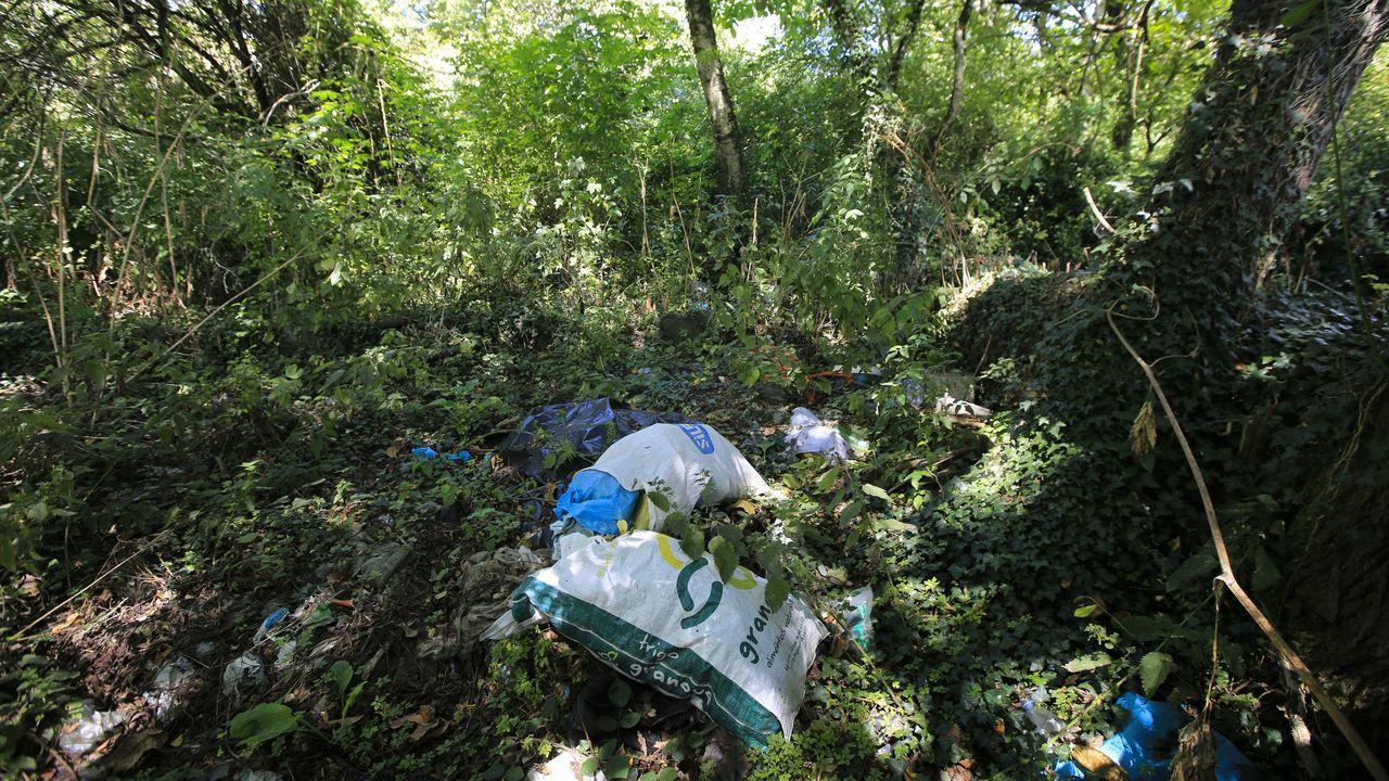 El entorno de San Lázaro está lleno de maleza y basura