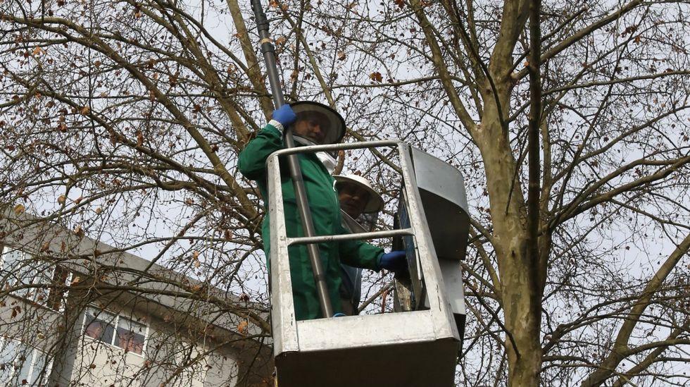 Los trampeos permitieron evitar entre 25.000 y 30.000 nidos de velutina