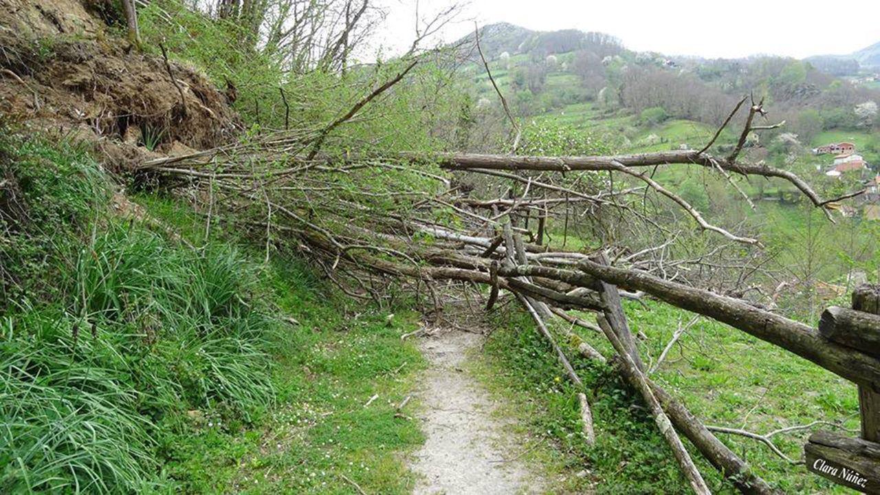 Un árbol corta un camino en Turón