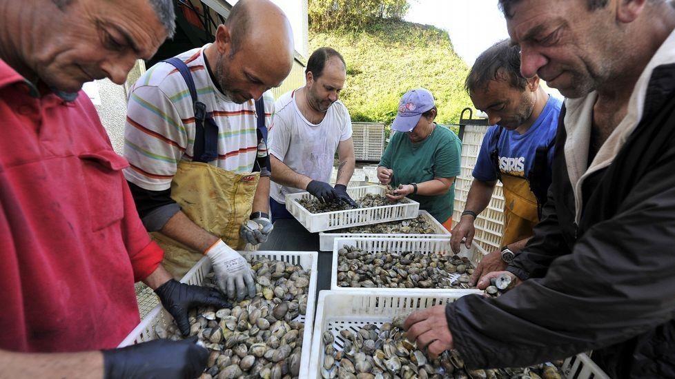 Mariscadores de Barallobre separando almeja muerta procedente de las bateas