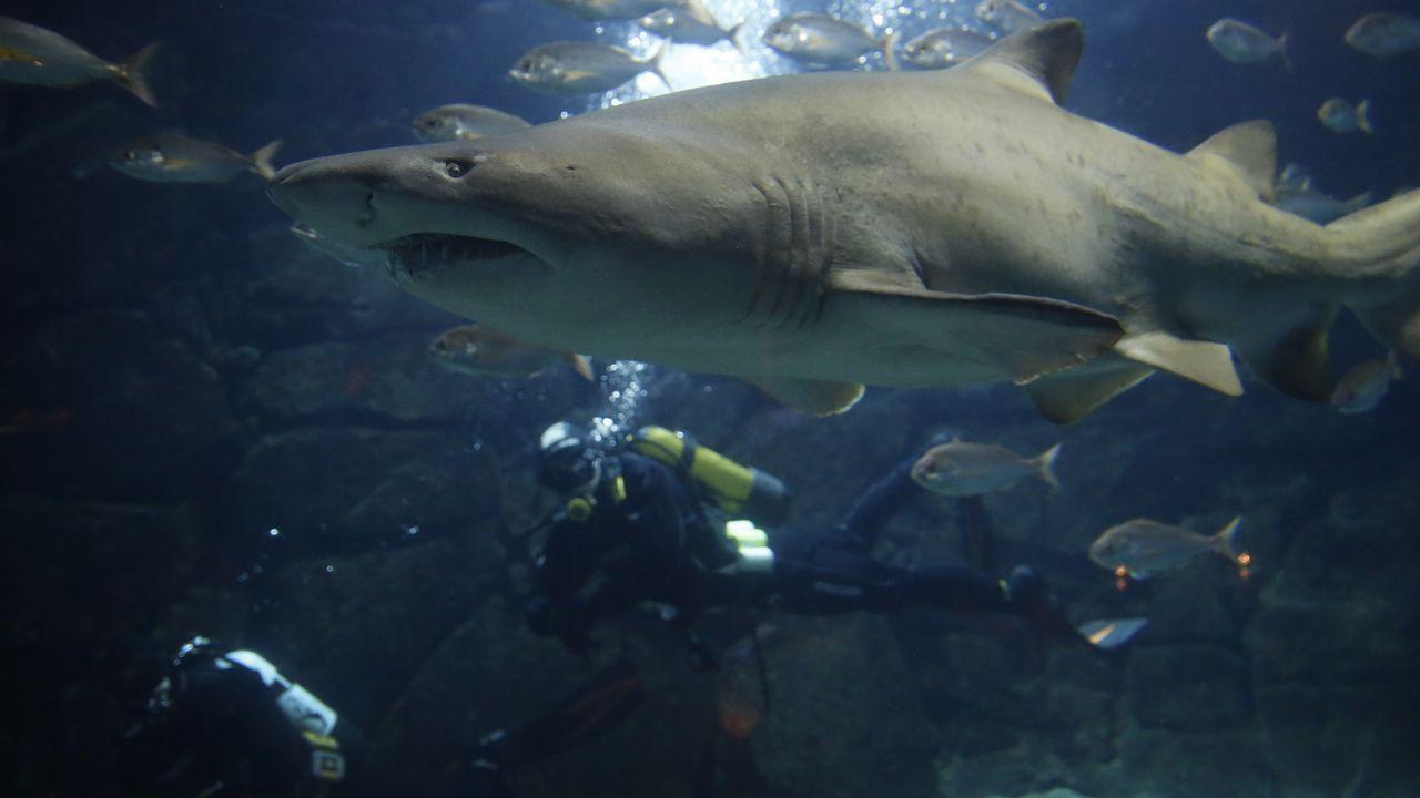 Y el tiburón Gastón salió de caza.Al Gore, expresidente estadounidense y premio nobel de la paz por su lucha contra el cambio climático reclamó en la cumbre una acción decidida