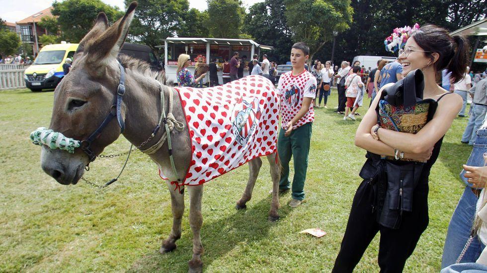 Uno de los burros finalistas, cubierto con los colores del Athletic de Bilbao