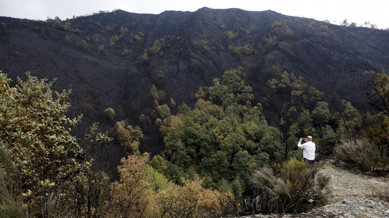 Cela, hace un año, en la vía de Degrada a Doiras.La imagen muestra a una ladera calcinada, aunque con frondosas que aguantaron