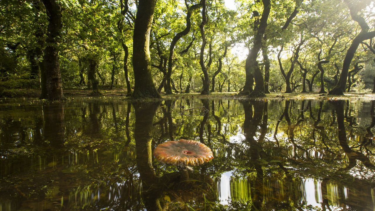 Recuperan el cadáver del joven ecuatoriano desaparecido mientras pescaba.Carballeira de Baio