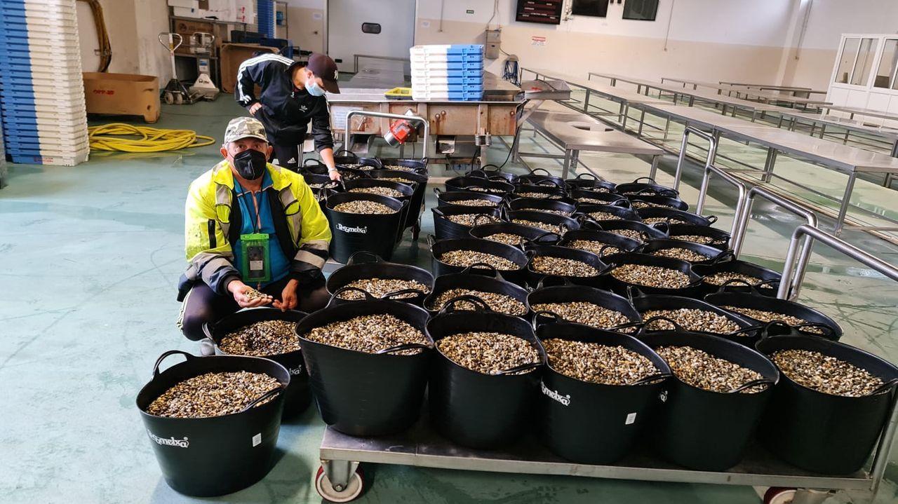 Siembran 35.000 erizos de acuicultura en dos bancos naturales de A Coruña.La imagen de la Virgen del Carmen, a bordo del barco Pedriñablanca, en la procesión marítima de 2019, la última que se ha podido celebrar