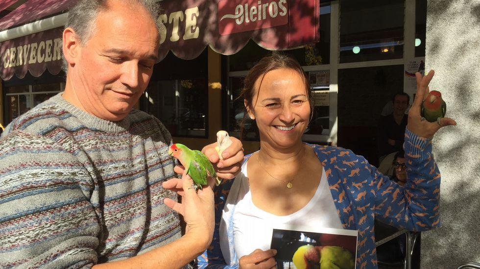 Raúl Piñón y Norma Días, del bar Pikatoste de Perillo, en Oleiros, con sus loros agapurni