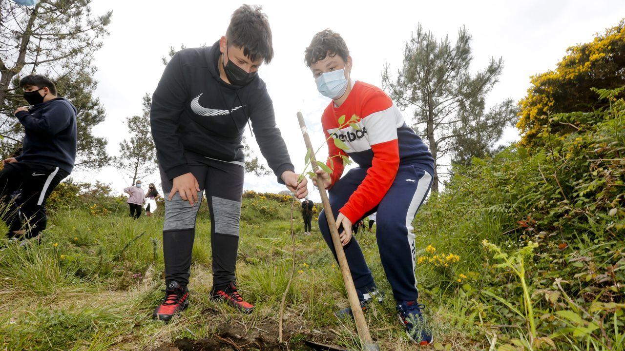 Alumnos de Fisterra reforestan con frondosas el monte local.Alumnos del IES Jovellanos de Gijón a su llegada a las aulas