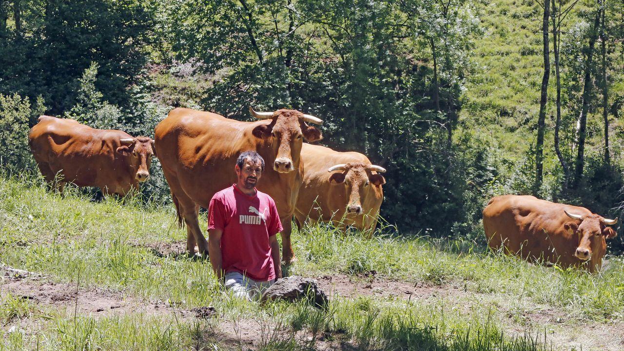 José Manuel ha crecido entre vacas. Basta observar cómo las mira para entender su forma de trabajar.