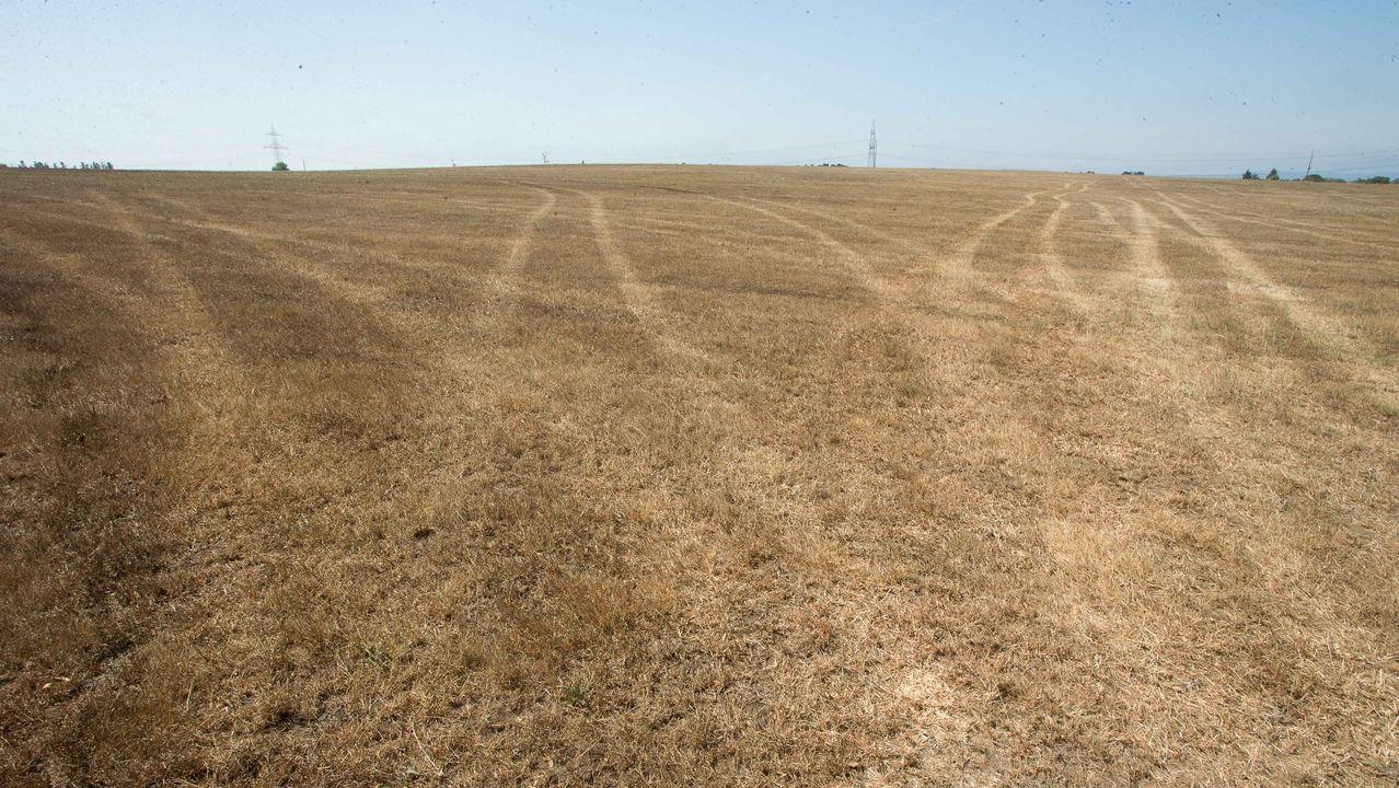 Campos secos en el municipio de Castro de Rei