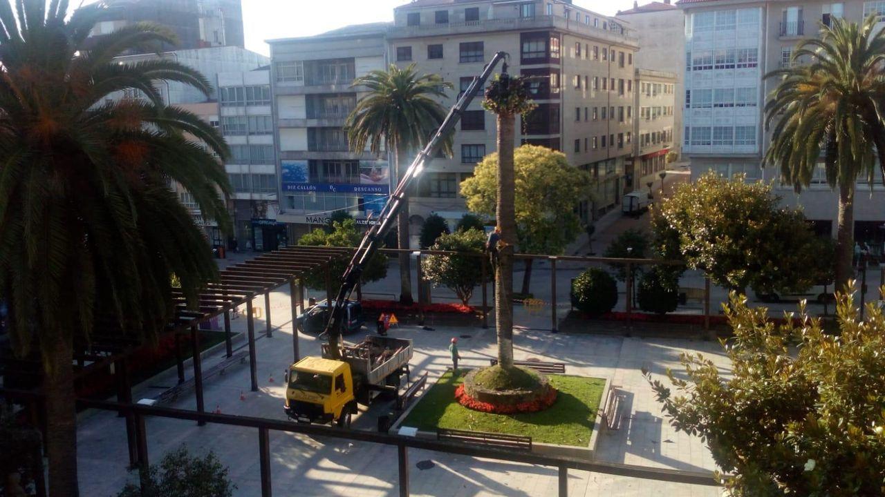 Adiós a la emblemática palmera del Concello de Ribeira