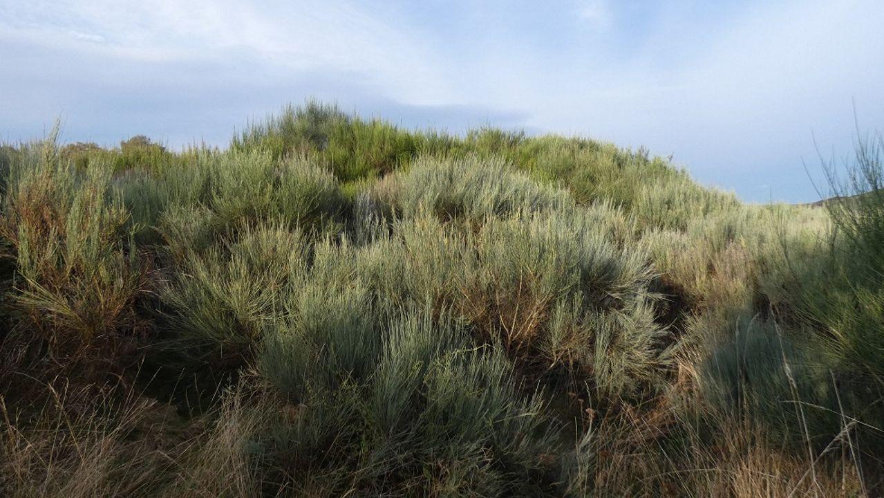Mámoa que foi atopada en Pedrafita do Cebreiro