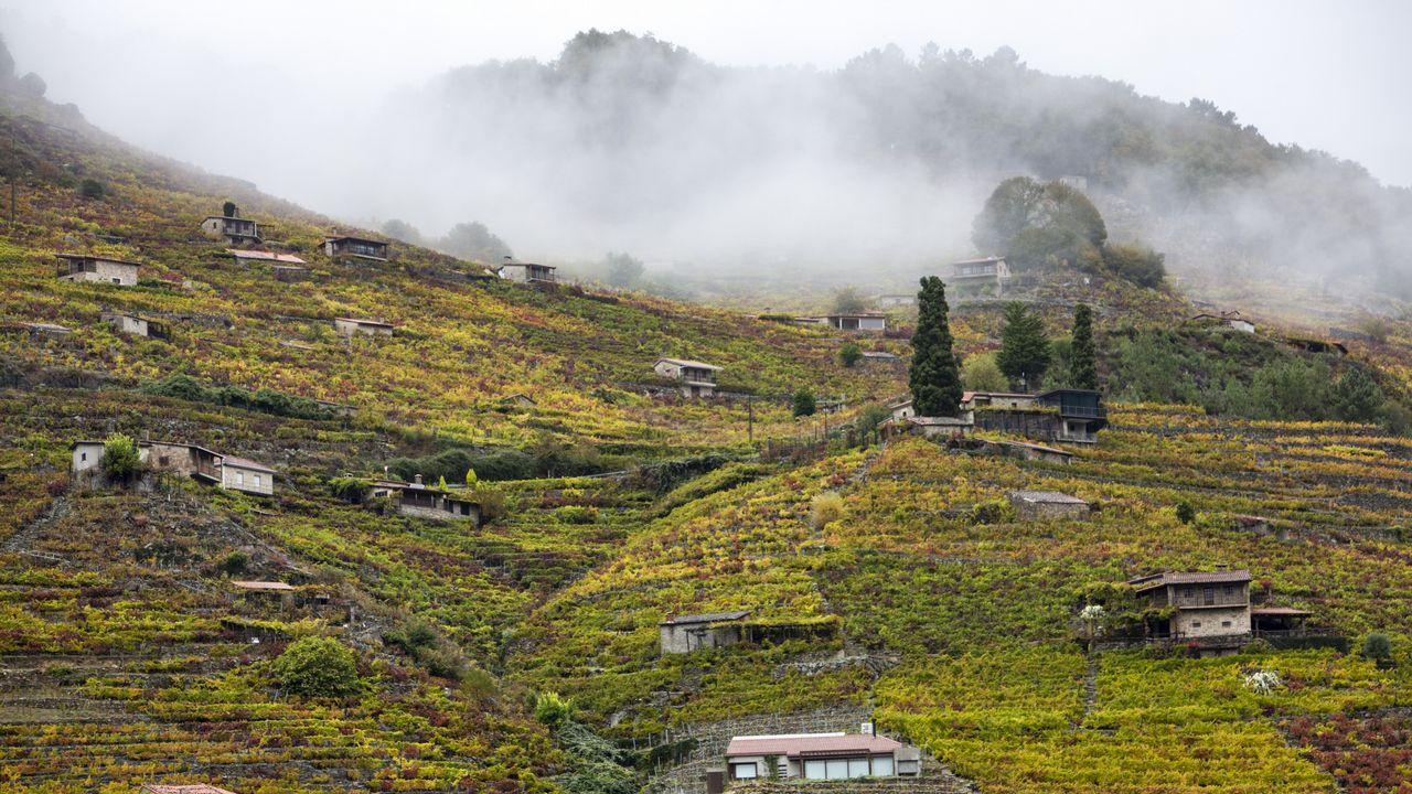 Las viñas de San Fiz, en Chantada