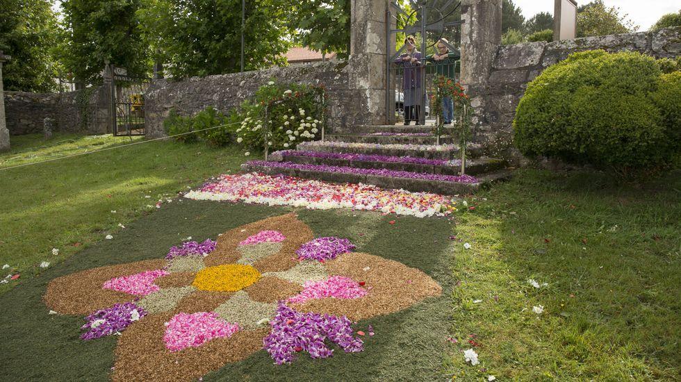 Flores en Baio
