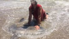 La Guardia Civil investiga la muerte de un pez luna en Roquetas de Mar