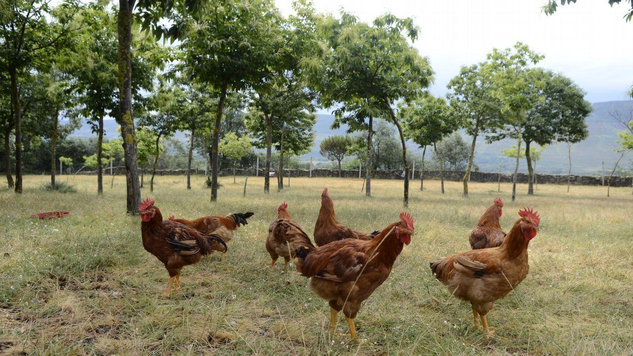 El sueño de la permacultura cala en Galicia.Los productos naturales y ecológicos a granel son cada vez más demandados