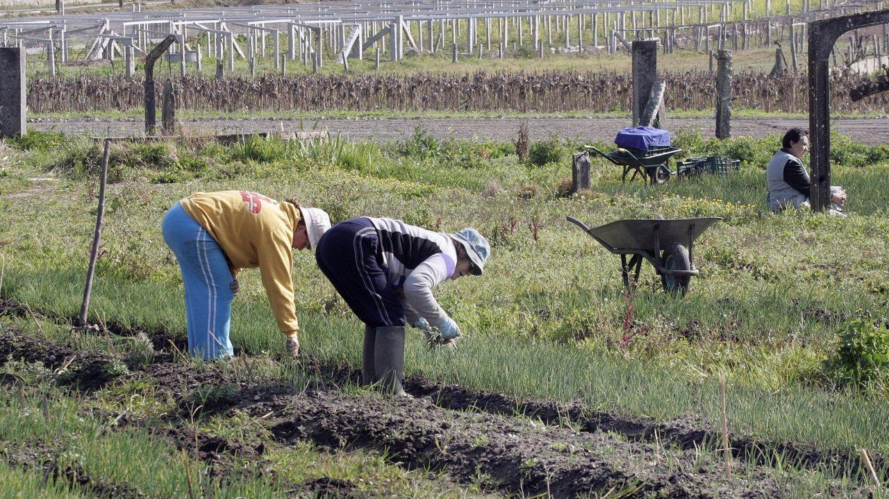 Una granja en una imagen de archivo