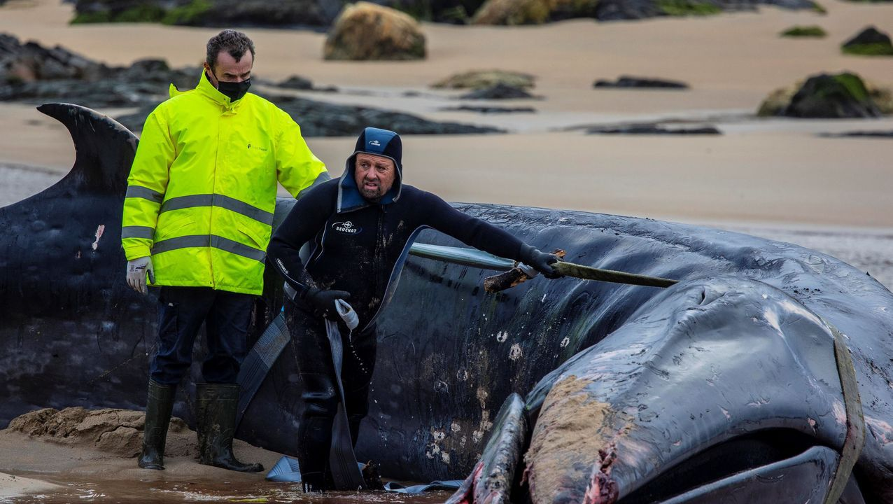Retiran la ballena varada en Tapia.Barrera de contención situada en los accesos al puerto de Candas.