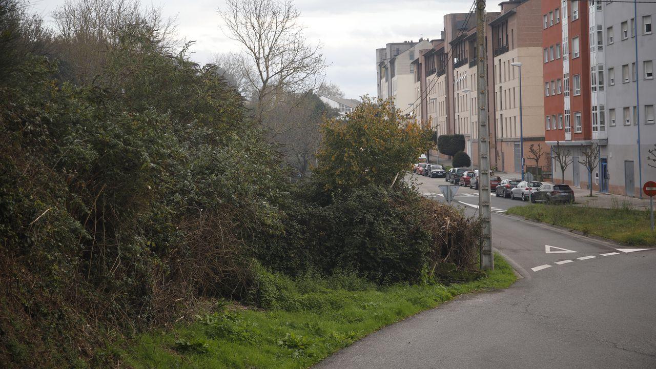 En la ciudad de Lugo hay numerosas fincas sin limpiar