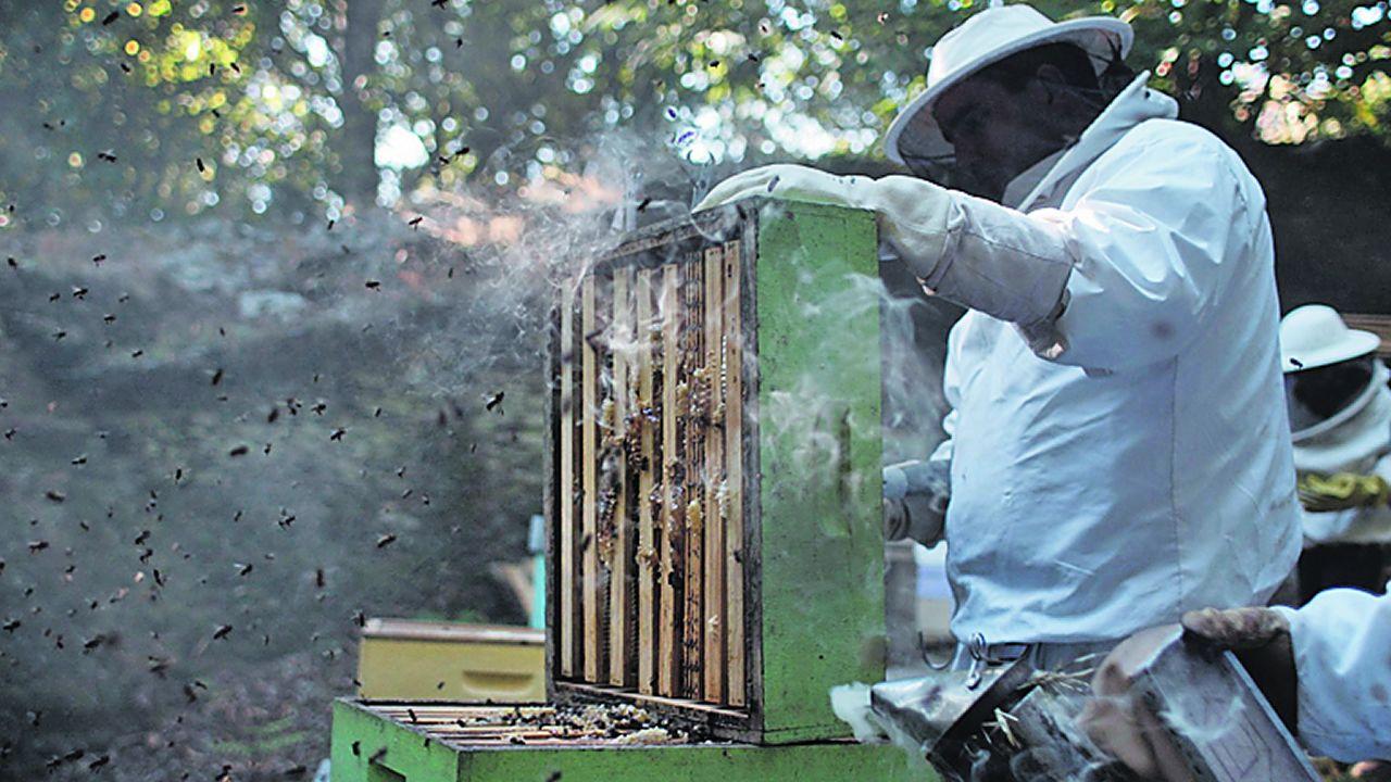 Concentración de apicultores gallegos.Una alvariza o abellariza próxima a los cañones del Sil