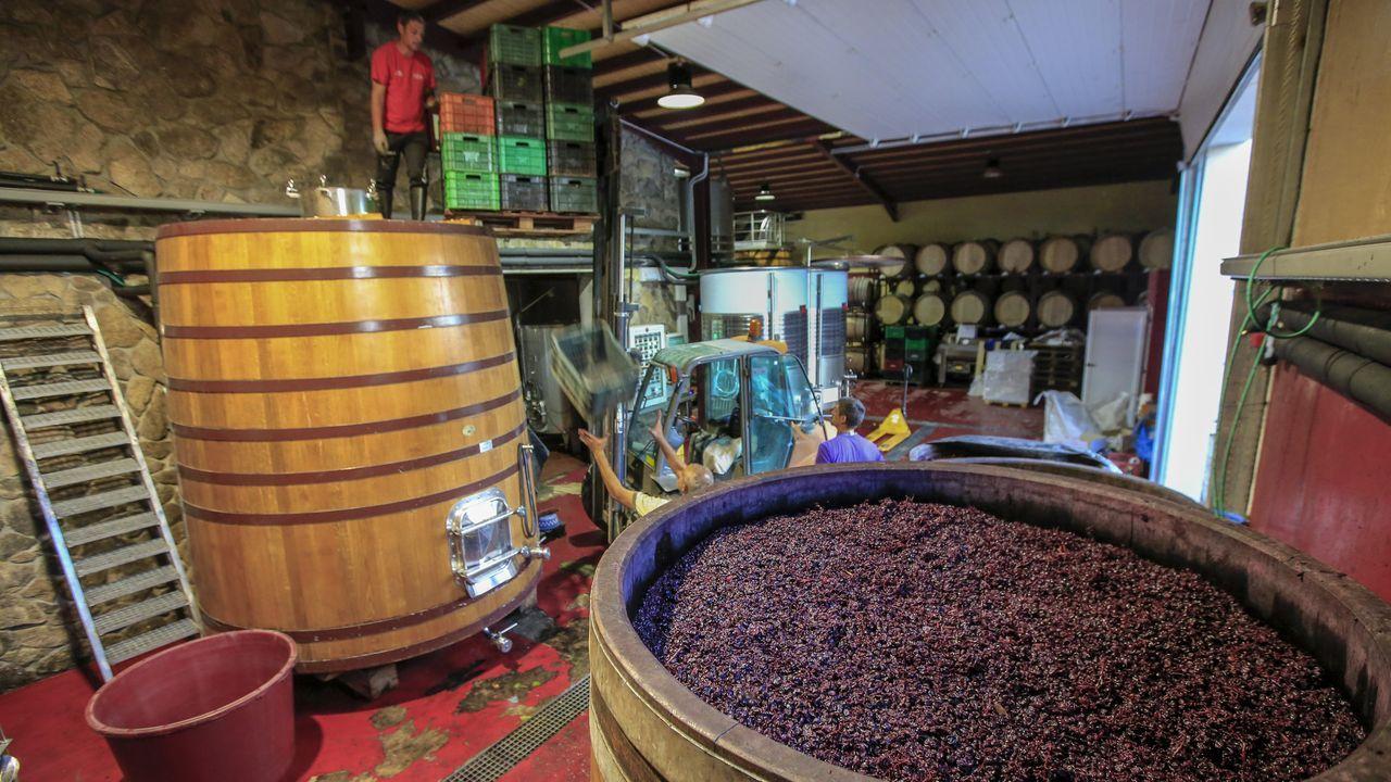 Los depósitos de madera se reservan para los vinos que pasan por una crianza prolongada