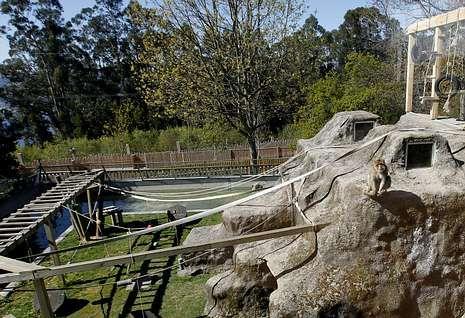 Cinco lugares en Galicia en los que entrar en contacto con los animales.La chow chow «Selva» falleció el 11 de julio