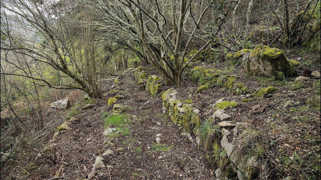 En el recorrido pueden verse antiguos socalcos o terrazas víticolas que fueron abandonadas hace muchos años