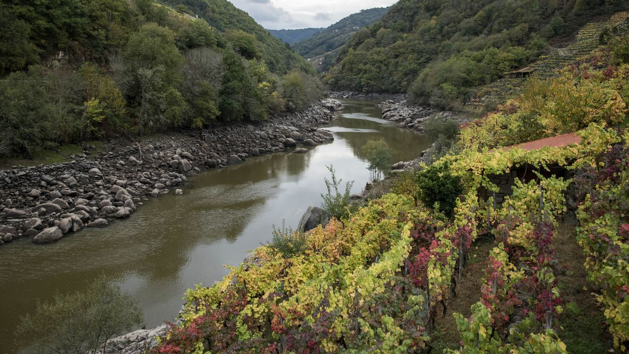 El cauce menguado del Miño corre al pie de las viñas en Chantada