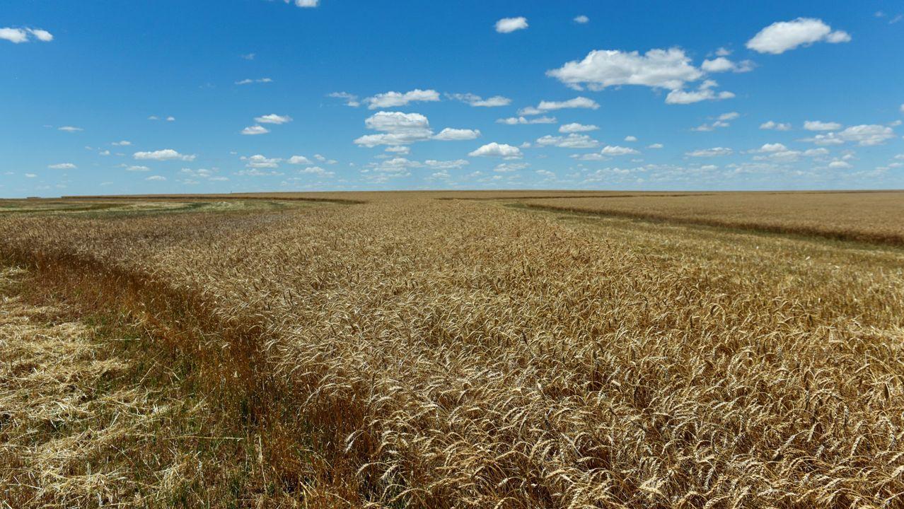 Imagen de un campo de maíz en Oklahoma
