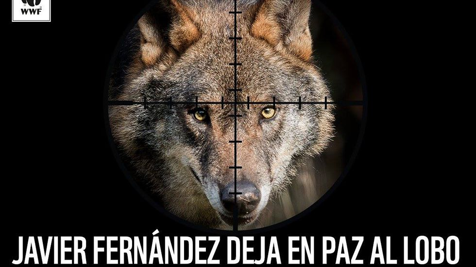 WWF pide al presidente de Asturias que no permita la caza indiscriminada del lobo
