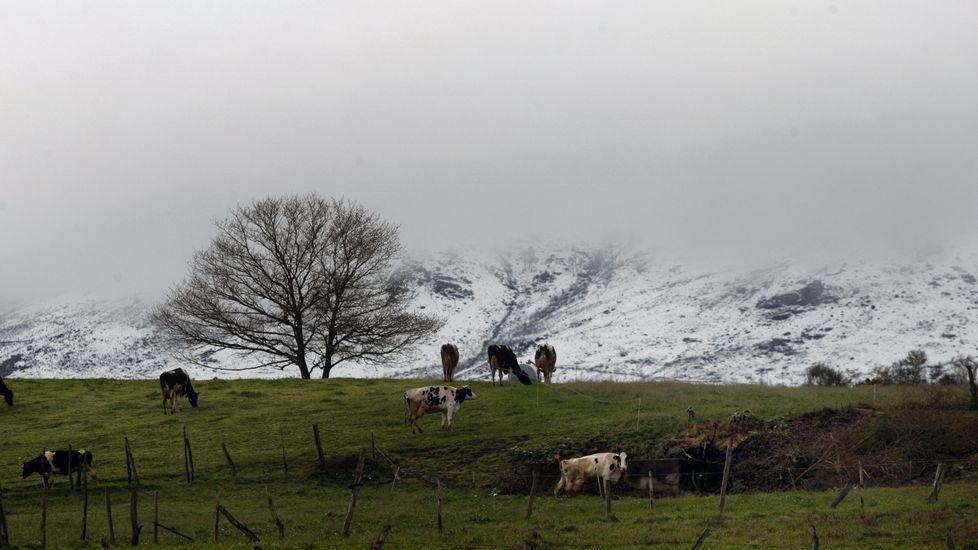 Imágenes de la nevada en el sur lucense