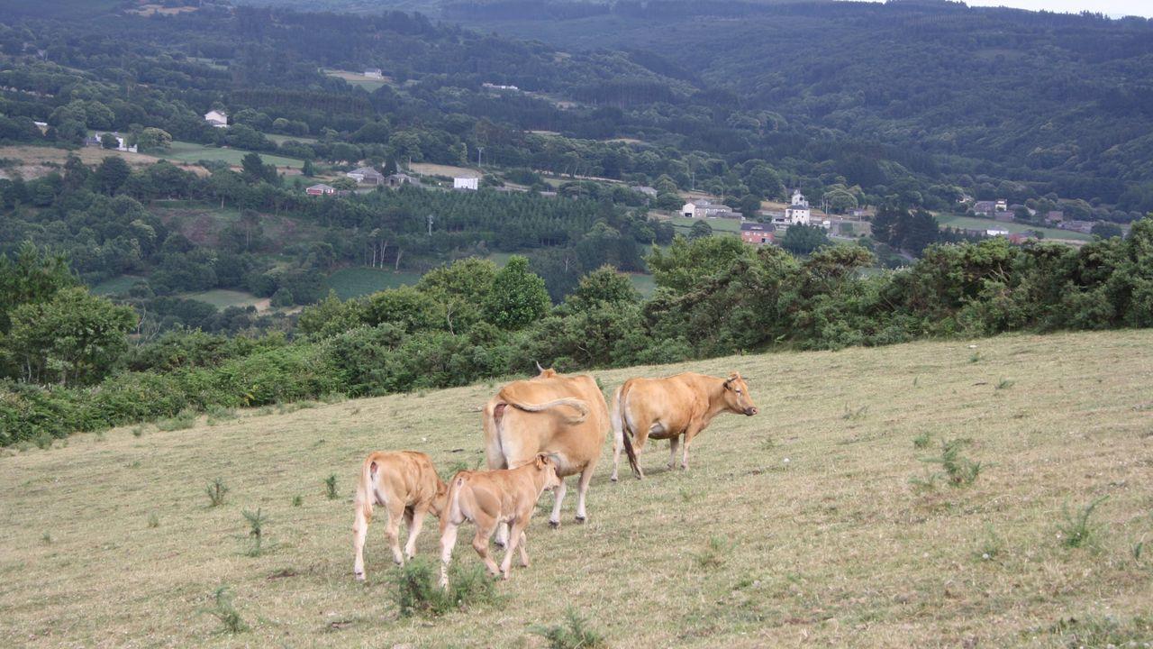 Cultivos hortícolas en ecológio en la parroquia de Merlán, en Palas de Rei