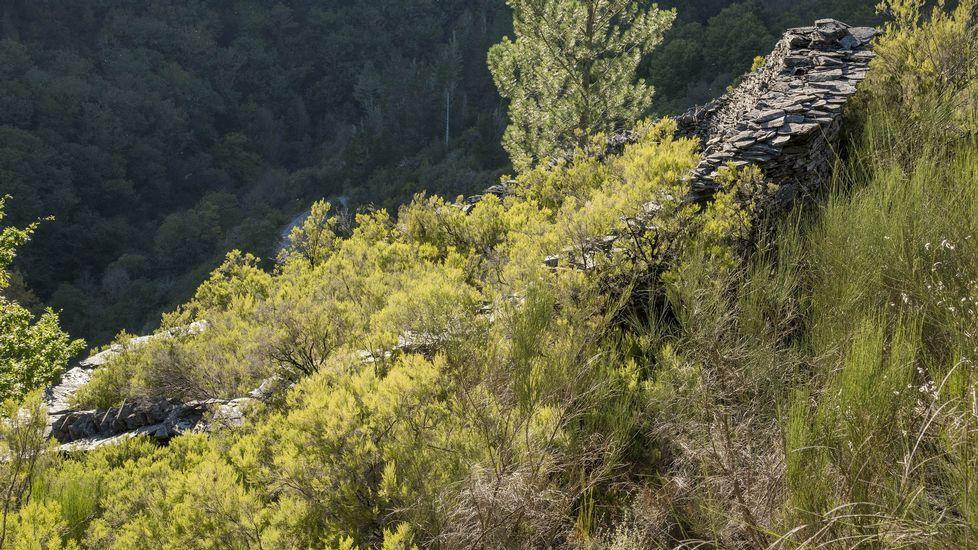 Una alvariza cubierta por la vegetación