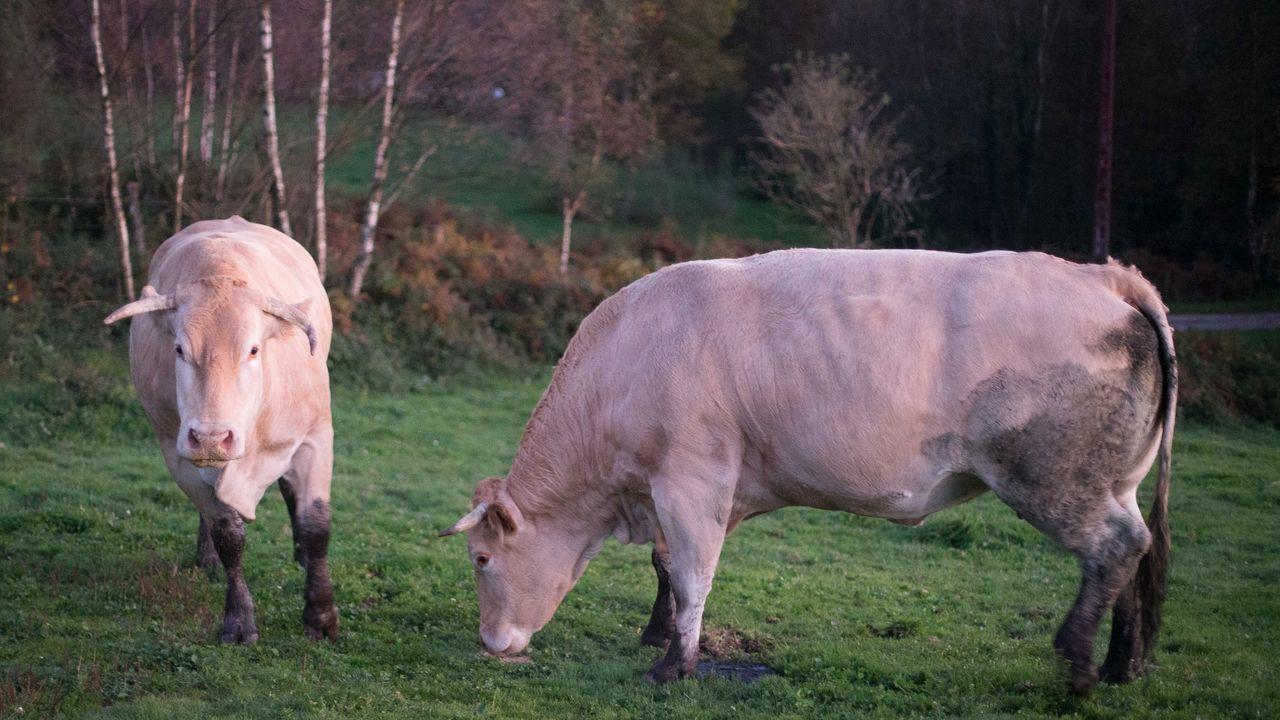 La ganadería se analizará en el ciclo Luis Asorey
