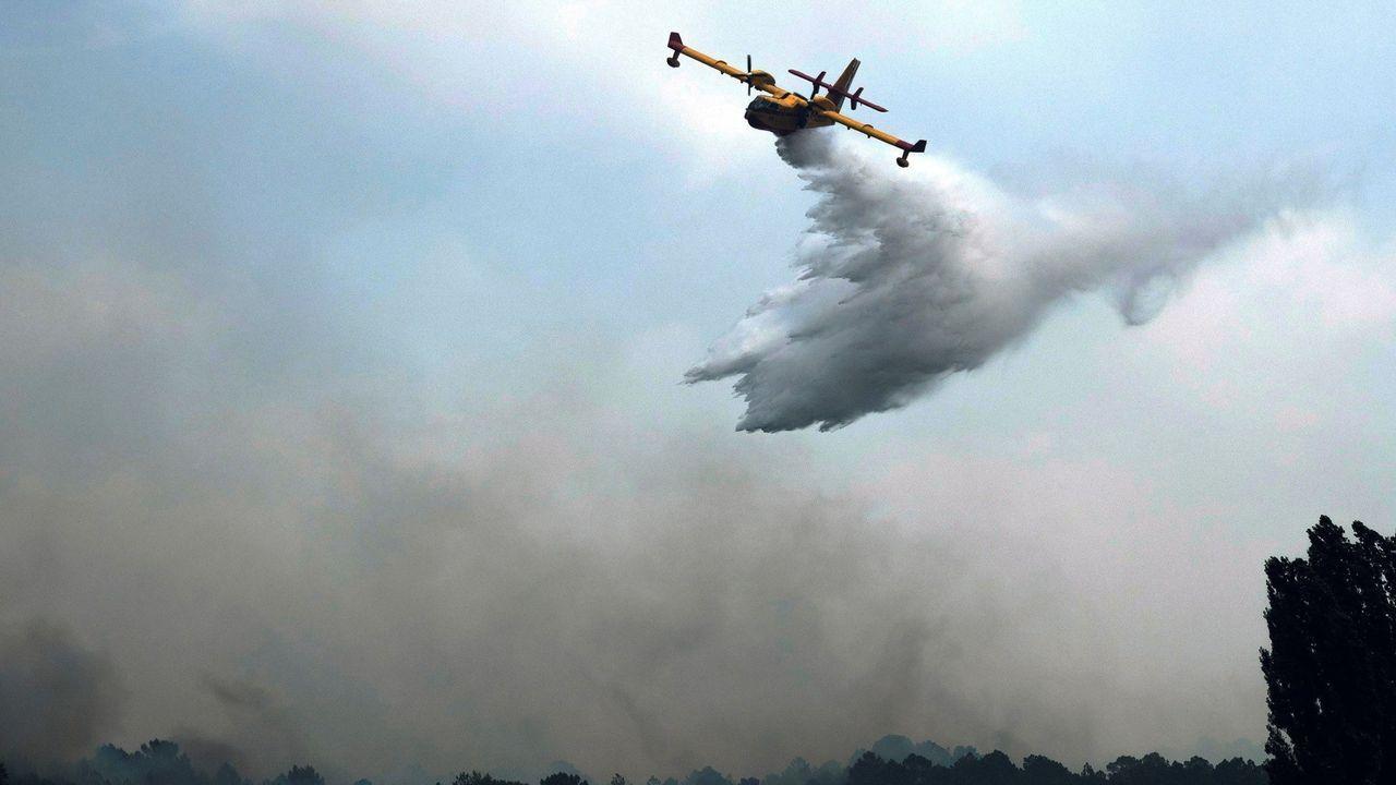 Rescatados seis cachorros enterrados vivos en Teruel.El Gobierno dispone de 73 aeronaves para la lucha contra los incendios forestales distribuidas en 47 bases de toda España