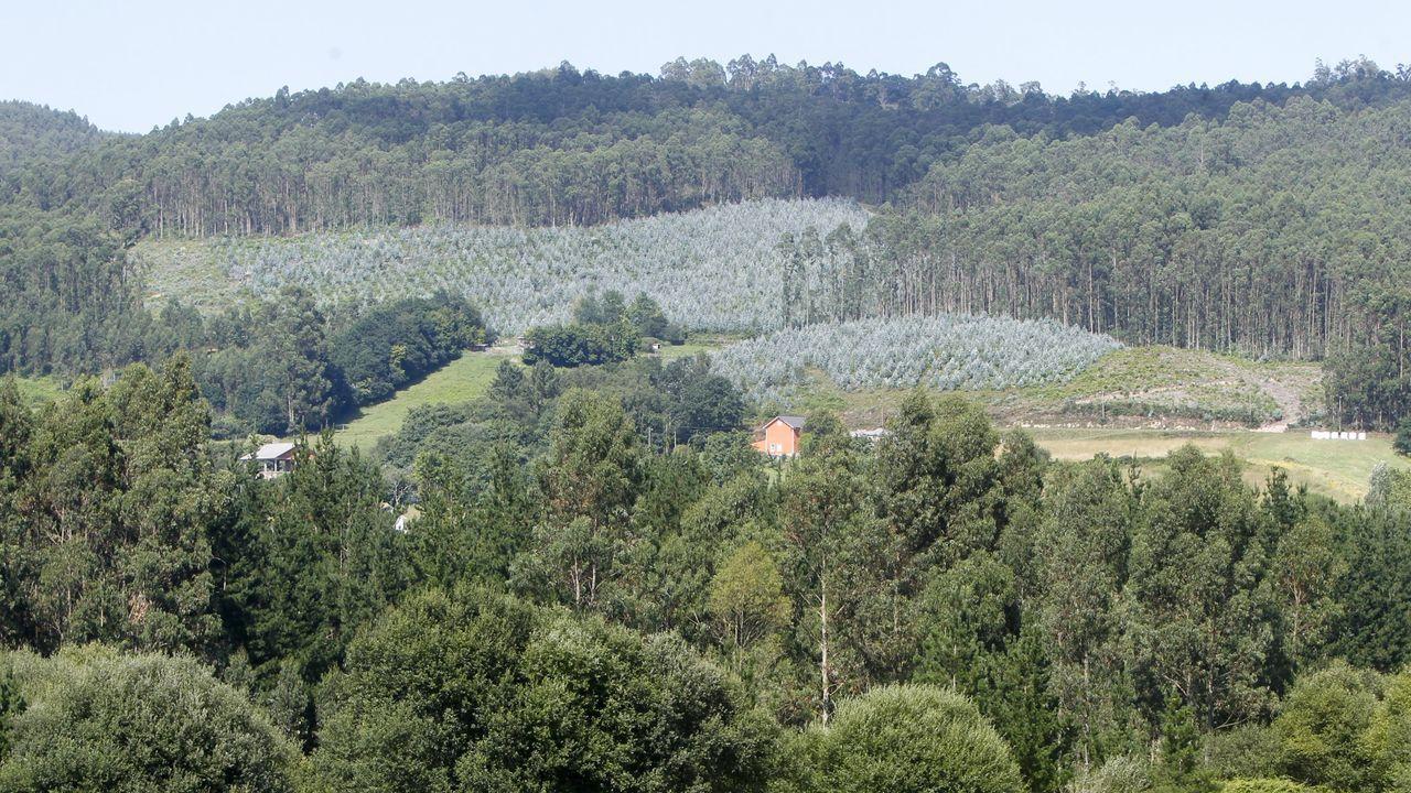 Amable muestra el producto que hacen sus abejas en la Serra do Xurés