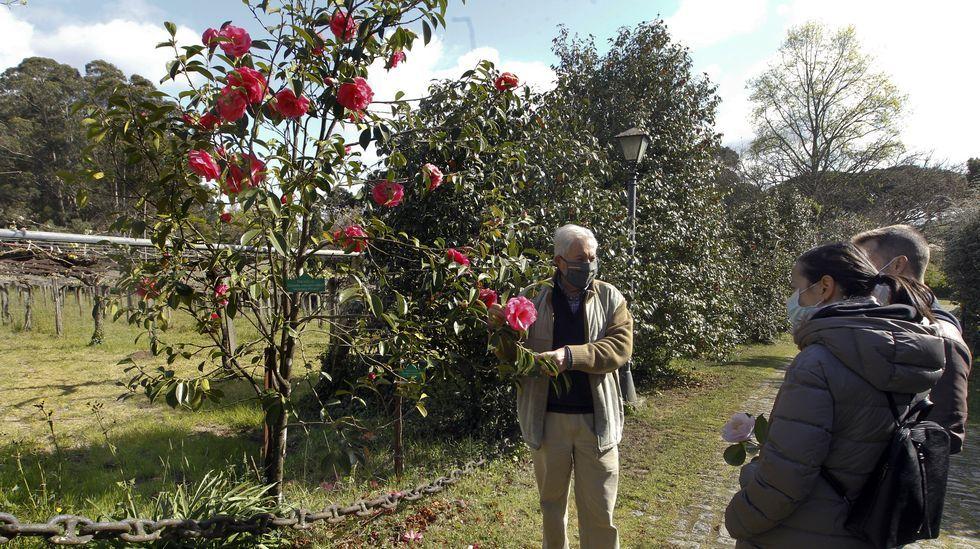 Visita en Quinteiro da Cruz, en Ribadumia, para ver camelias