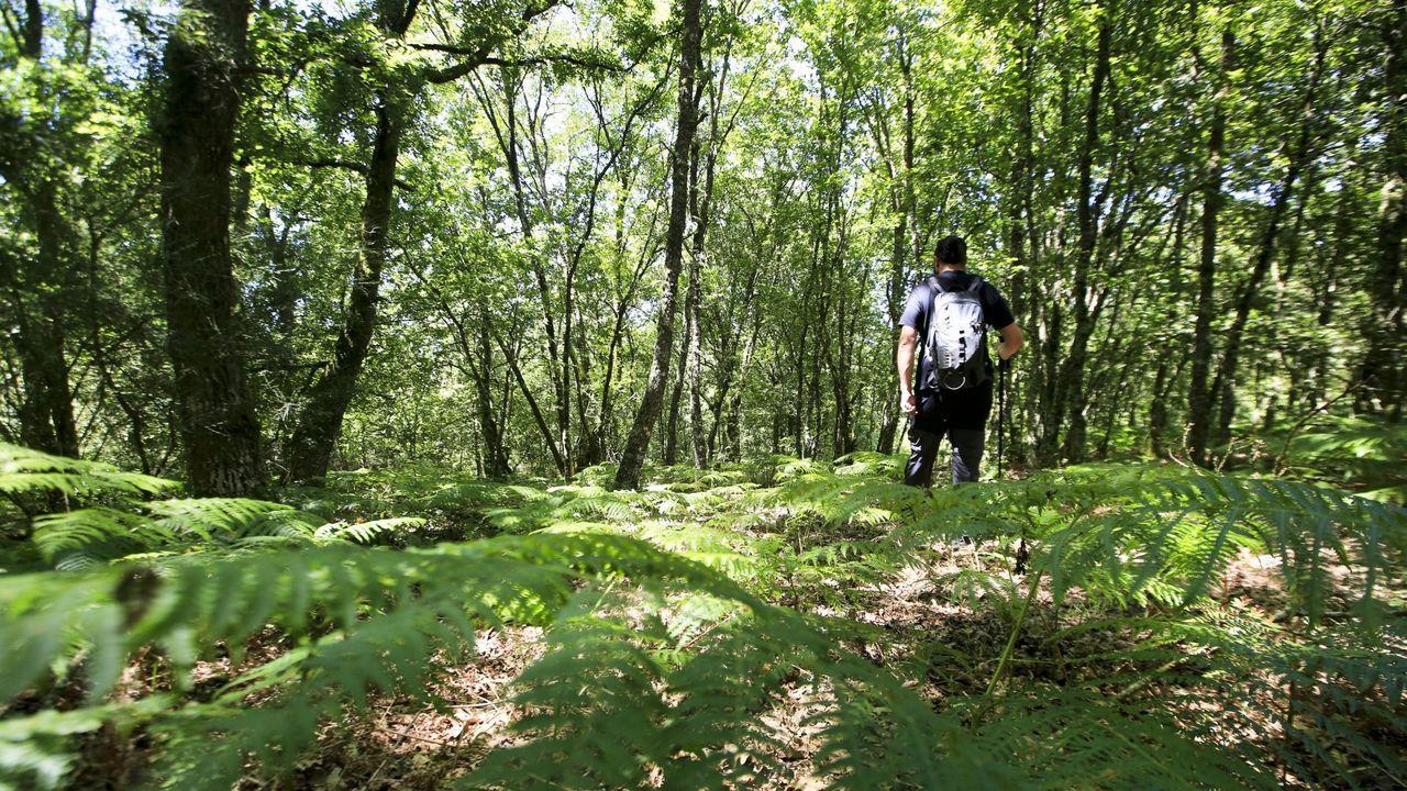 Acto de presentación en Antas de Ulla del Parque Central de Galicia.En este bosque de Antas de Ulla se halla el centro geográfico de Galicia