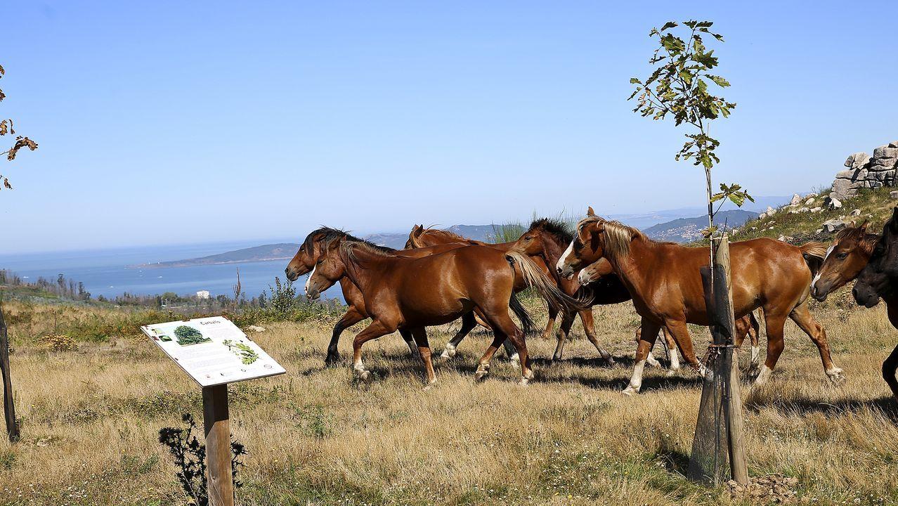 Un grupo de cabcallos en el Bosque da Memoria costruido en Chandebrito (Nigran)
