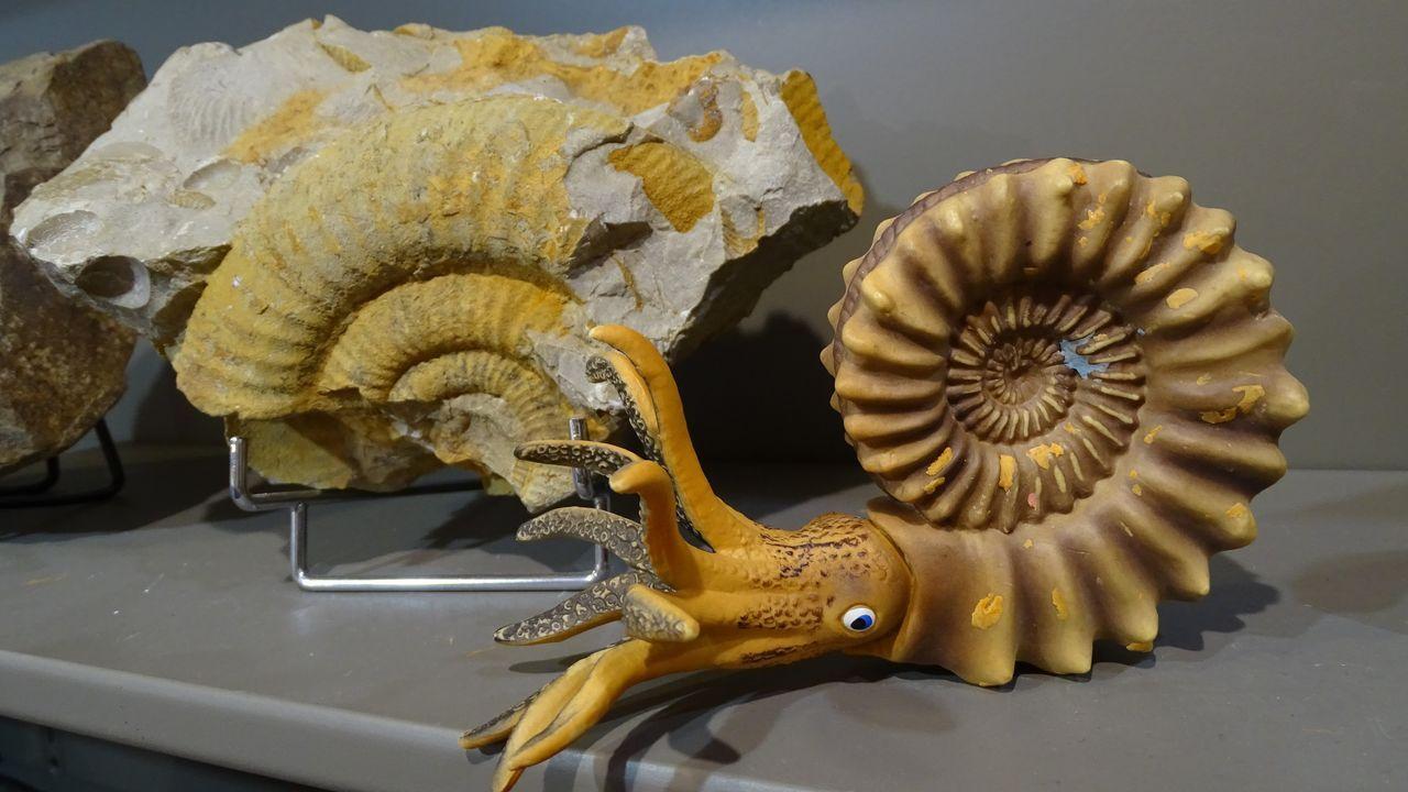Fauna del Paleozoico. El museo geológico de Quiroga cuenta con una serie de réplicas de fósiles de moluscos del Paleozoico que son utilizadas como materiales educativos, sobre todo en las visitas de grupos escolares. El centro adquirirá más materiales de este tipo de cara a su reapertura