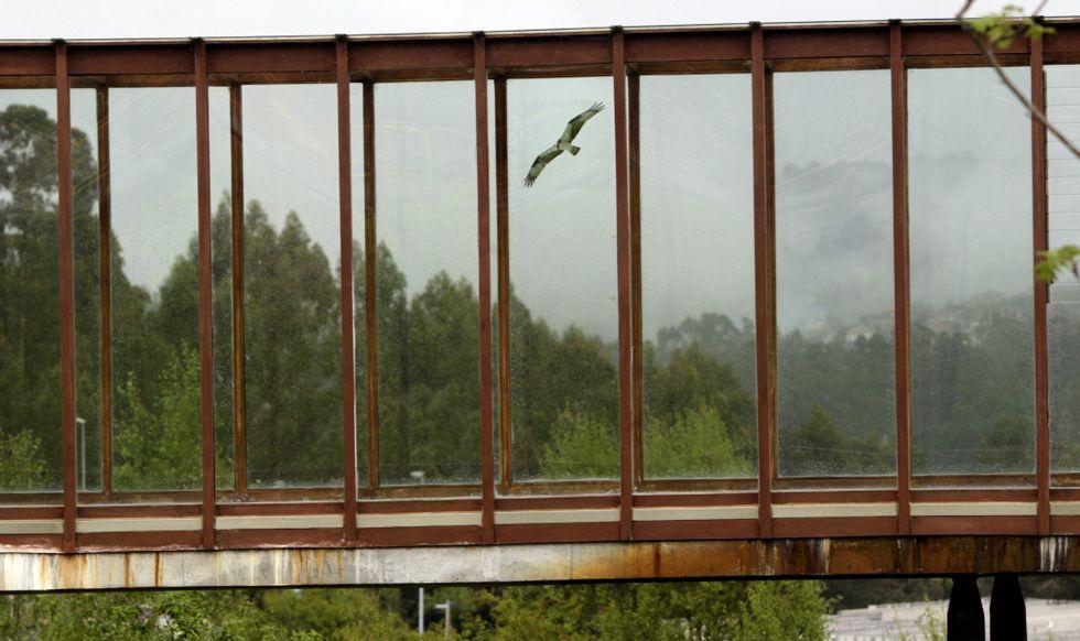 Uno de los adhesivos de aves rapaces está colocado en la pasarela de acceso a la biblioteca. Debajo, dos de los modelos diseñados.